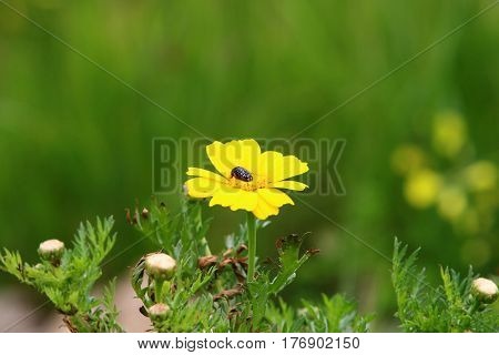 An insect sits on a flower and drinks sweet nectar