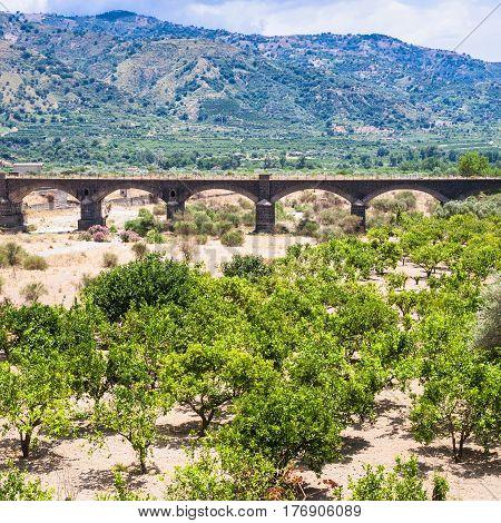 Citrus Garden In Alcantara River Valley In Sicily