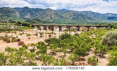 Tangerine Garden In Alcantara Valley In Sicily