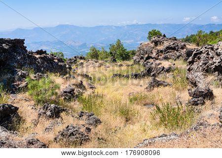Overgrown Hardened Lava On Slope Of Etna Volcano
