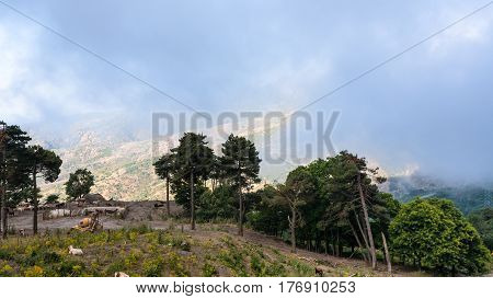 Pasture In Etna Region Of Sicily