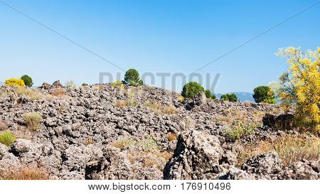 Bushes On Petrified Lava Flow After Etna Eruption
