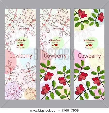 Herbal tea collection. Cowberry banner set. Hand drawn vector illustration