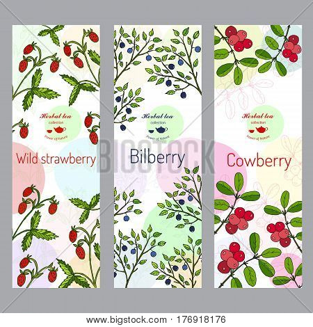Herbal tea collection. Wild strawberry, bilberry, cowberry banner set. Hand drawn vector illustration