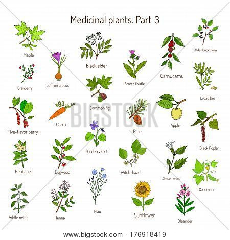 Vintage collection of hand drawn medical herbs and plants. Botanical set, vector illustration.