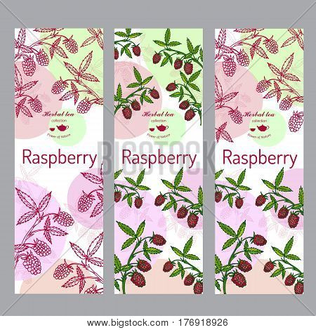 Herbal tea collection. Raspberry banner set. Hand drawn vector illustration