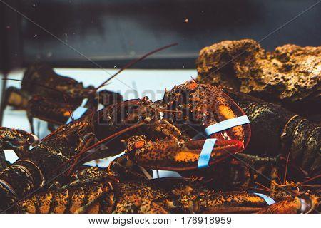 Lobster in the aquarium at the restaurant