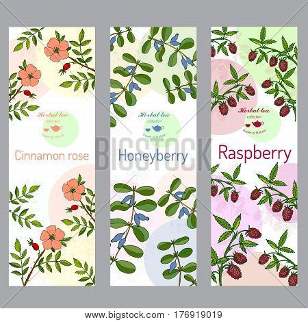 Herbal tea collection. Cinnamon rose, raspberry, honeyberry banner set. Hand drawn vector illustration