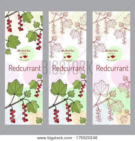 Herbal tea collection. Red currant banner set. Hand drawn vector illustration