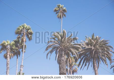 Palm trees in Venice beach, Los angeles