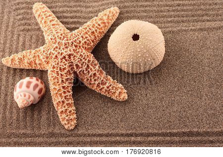 Zen Sand Garden with Starfish and Sea Urchin