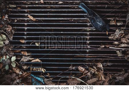 Closeup view of dead magpie on dirty grid.