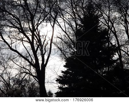 Spruce, needles, green, needles, cones, tree, smell, beautiful, sky,