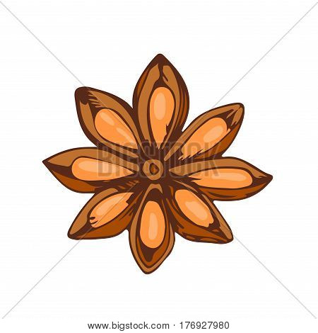 Whole star anise isolated on white background hand drawn aromatic spice food and seasoning aniseed aroma condiment vector illustration. Cooking herb chinese brown ingredient.