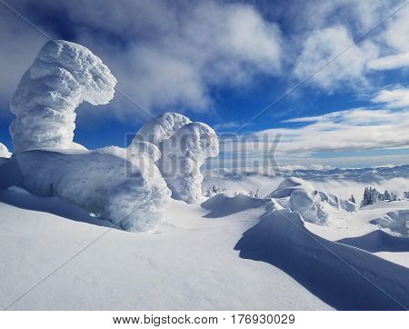 Snow Covered Mountain Trees in the High Alpine on a Sunny, Blue Day