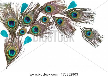 Group of turquoise bright peacock feathers on the white background lying flat arc composition top view horizontal format