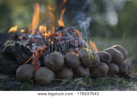 Baked potatoes piled near a burning forest fire