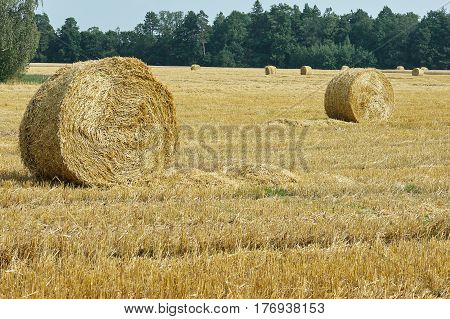 Mown Meadow Hay Roll