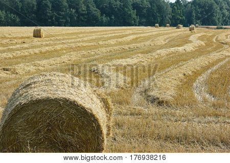 Mown Meadow Hay Roll