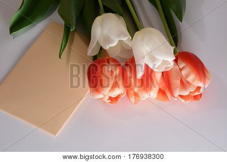 Bouquet of white and red tulips close-up with envelope isolated on white background