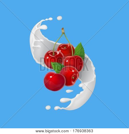Red cherries fruits falling into the milky splash. Vector illustration
