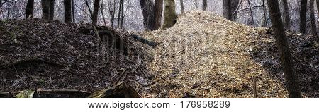 Mountain of sawdust in the forest wildlife and deforestation