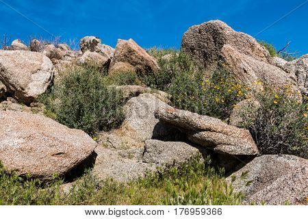 Spring wildflowers and boulders in the Anza-Borrego State Park in Southern California.