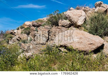 Anza-Borrego State Park boulders and spring wildflowers in Southern California.