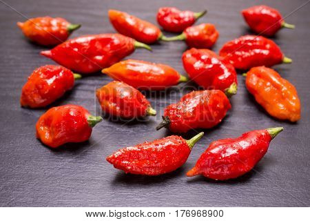 A lot of red Bhut Jolokia fruit on table