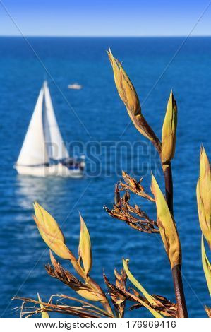 summer sea landscape with a white yacht and a flax plant at the foreground, location - Wellington, South Island, New Zealand