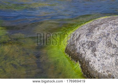 Algae polluted water and black shine stones