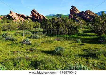 Lush green chaparral woodland during spring at Vasquez Rocks where rocks are uplifted from the San Andreas Fault taken in the Mojave Desert, CA