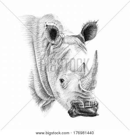 Portrait of rhino drawn by hand in pencil. Originals no tracing