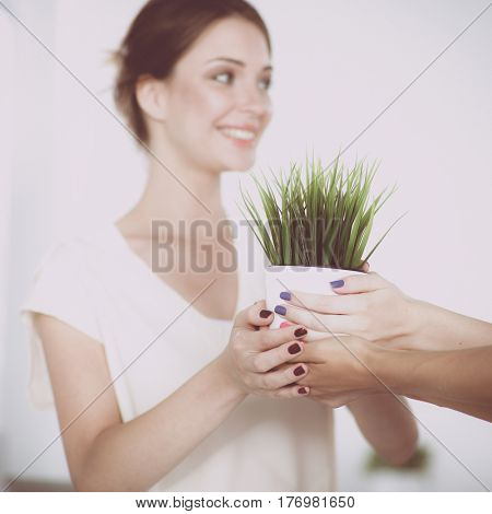 Closeup Of Businesspeople Hand Holding GrassTogether