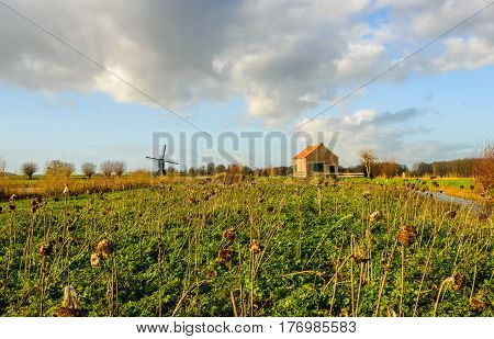Picturesque Dutch landscape in the fall season with overblown sunflowers in the foreground and an old hollow post mill in the background