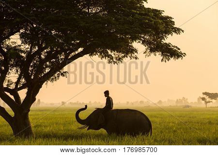 Elephant mahout thailand life traditional of asia culture