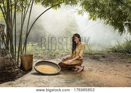 Women young farmers harvest or separate rice seed agriculture Thailand.
