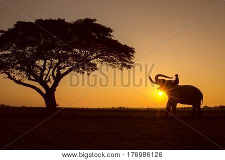 Silhouette tree animal elephant and mahout man Sunrise background at Thailand morning time.