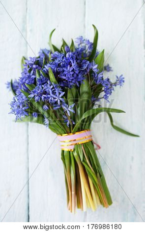 Bouquet of spring blue muscari. Top view