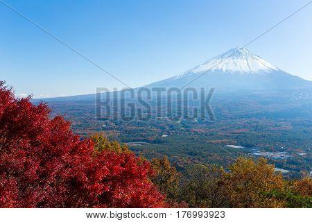 Maple tree and fuji
