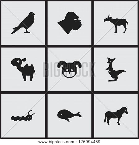 Set Of 9 Editable Animal Icons. Includes Symbols Such As Chimpanzee, Dromedary, Eagle And More. Can Be Used For Web, Mobile, UI And Infographic Design.