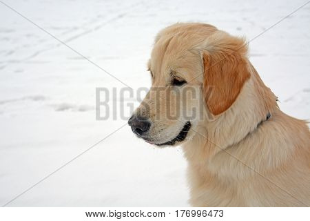 The portret of dog sitting on snow