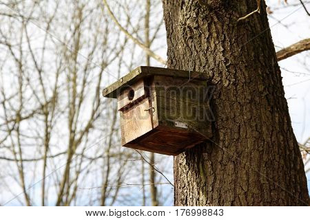 Birdhouse / Bird house in tree from the forest