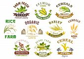 Cereal product icons. Vector symbols of wheat flour bag, rye ears and grain, buckwheat seeds and oat or barley millet and rice sheaf. Isolated agriculture corn cob and farm legume beans or pea poster
