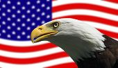 Fierce looking Bald Eagle guarding the American Flag poster