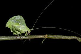 Grünes Blatt wie Ecuador