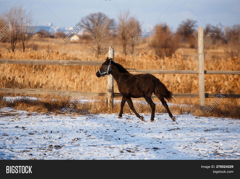 Black Horse Running Image Photo Free Trial Bigstock