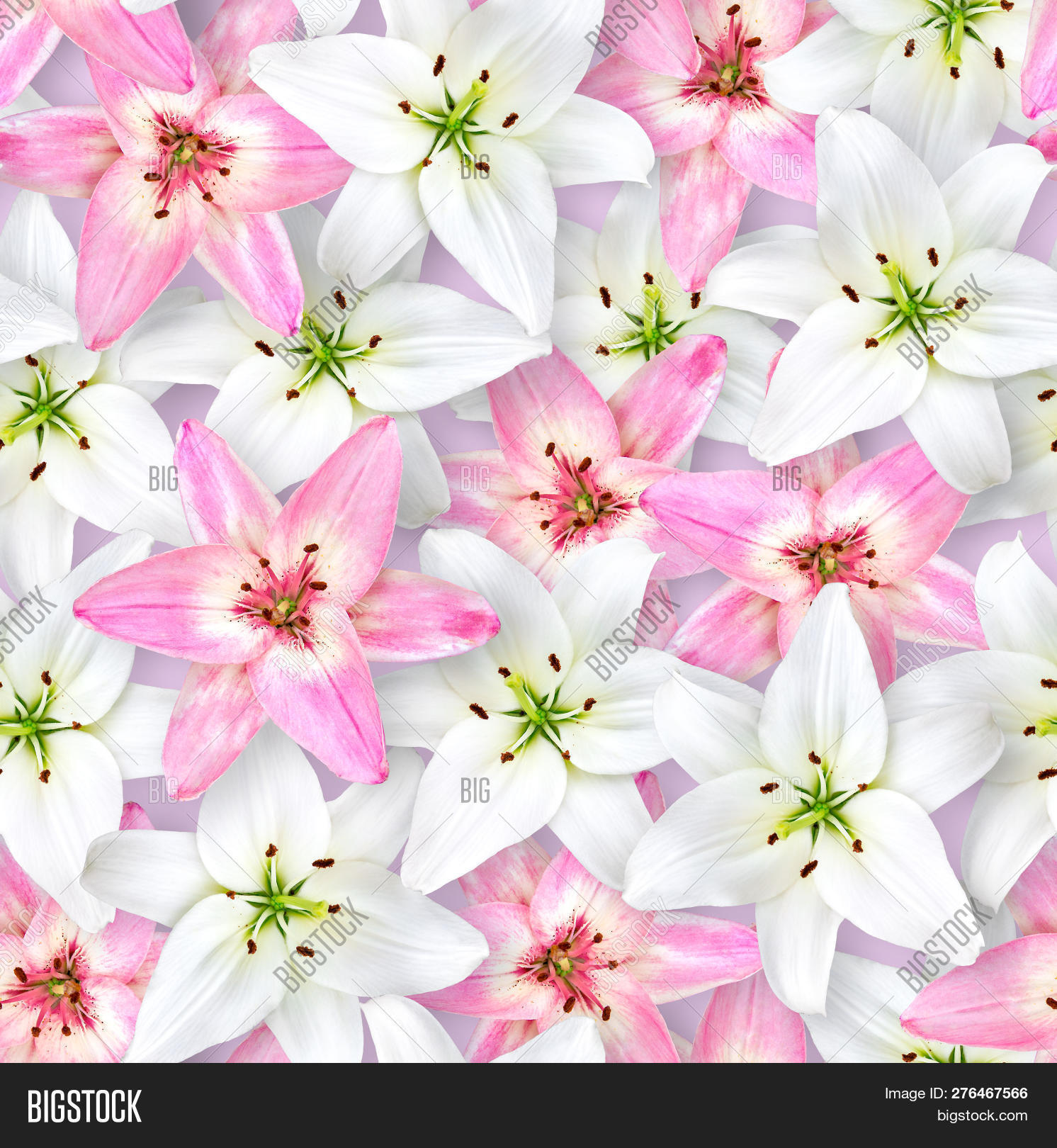 Seamless Floral Image Photo Free Trial Bigstock