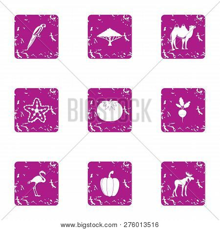 Feral icons set. Grunge set of 9 feral icons for web isolated on white background poster