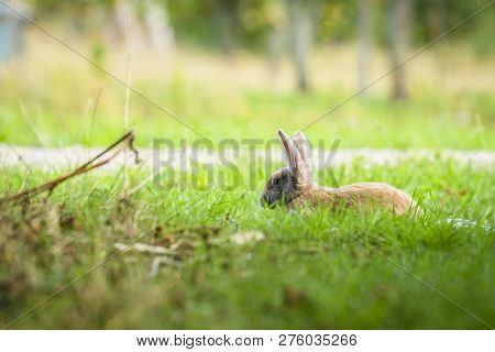 Rabbit Relaxing In Fresh Green Grass In The Spring On A Sunny Day At Easter Time